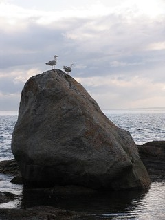 Sea Gullable