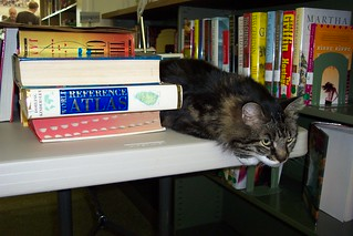 Emma the Lyme Public Library Cat