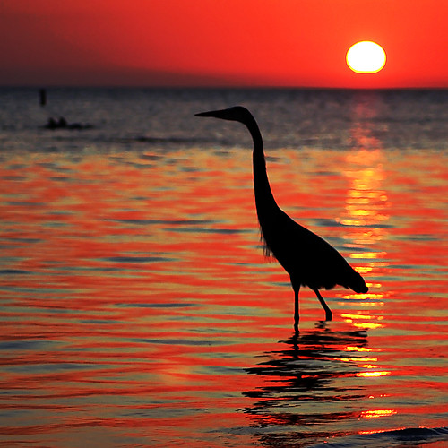 ocean sunset sea orange sun reflection bird water yellow reflections fire paradise florida crane dolphin horizon beak dolphins tropical ce1777
