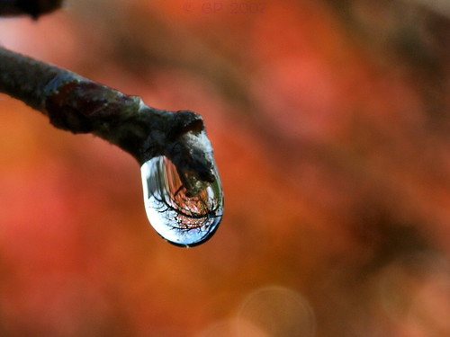 More drops anyone?   by Ginstercat