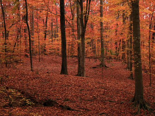 autumn atlanta orange color georgia with decatur nothing naranja rhymes naturesfinest blueribbonwinner blorenge rhymeswithorange netneutrality wdthompsonpark matters2me