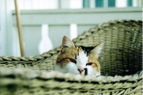 Cat still in a basket.