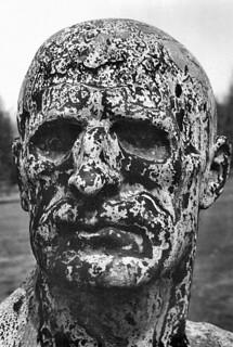 A haughty head