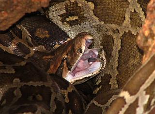 Python | by wildxplorer