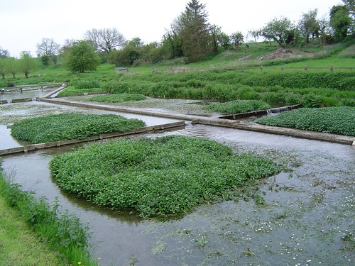 Watercress beds | by UnconventionalEmma