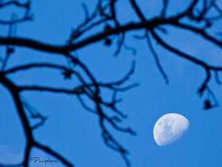 Daylight moon | Lua diurna | by F.Pamplona