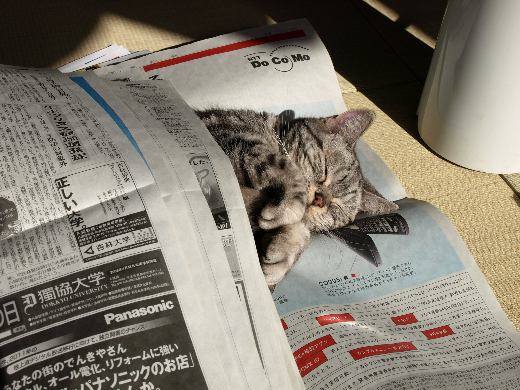 A grey tabby cat curled up and sleeping between newspaper sheets.