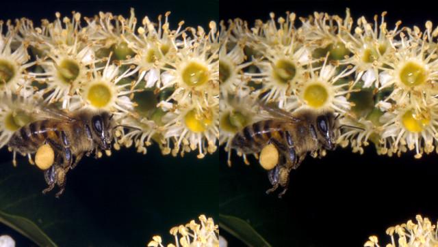 Bee In Flight  (3D Cross-View)
