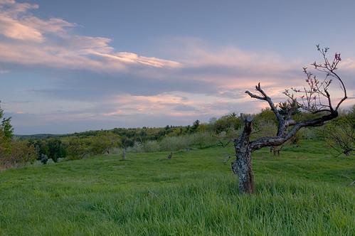 sunset evening nh orchard hollis nen utatafeature