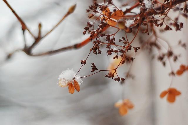 Powdery snow on a leaf