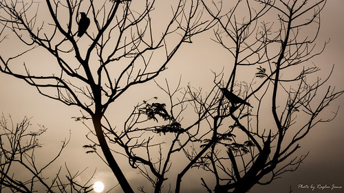 bangalore birds sunrise morning silhouette india raghujana bengaluru karnataka in