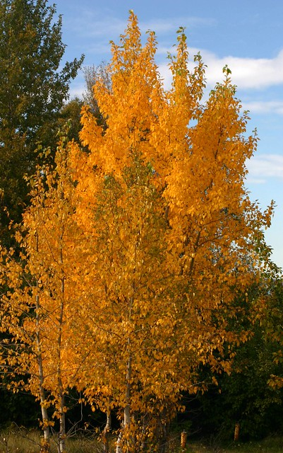 Falls colors near Anchorage Airport