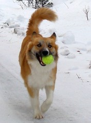 Tennis Ball Obsession   by Lisa G Richards
