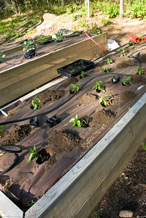 Humble Garden 2008: planting and rigging the irrigation | by nikaboyce