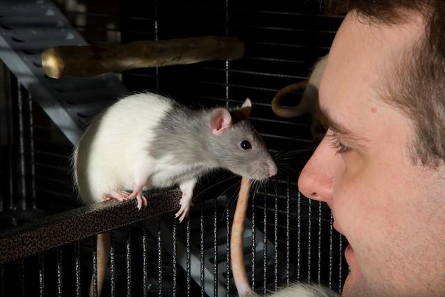 Eric & The Rats 1472