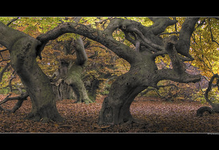 Entrance to the Ents World | by Gero Brandenburg