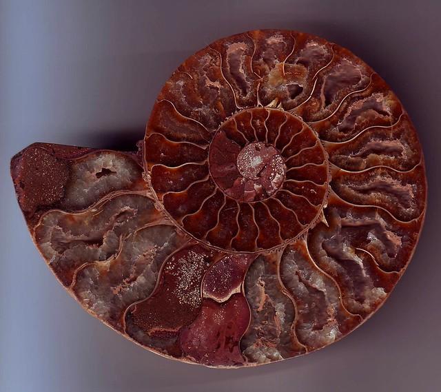 Spirale meravigliosa
