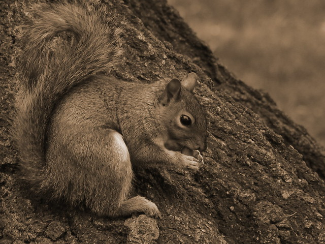 Love the squirrel