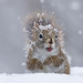 Your not Gona Believe it... Its Snowing Out by Jeff Manser