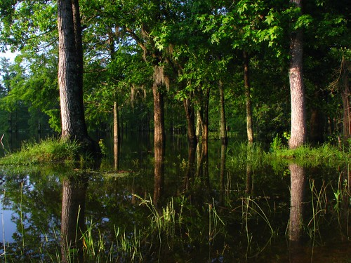 sunrise interesting louisiana swamp cypress reflexions naturesfinest unature unaturefav absolutelystunningscapes águasdivinas
