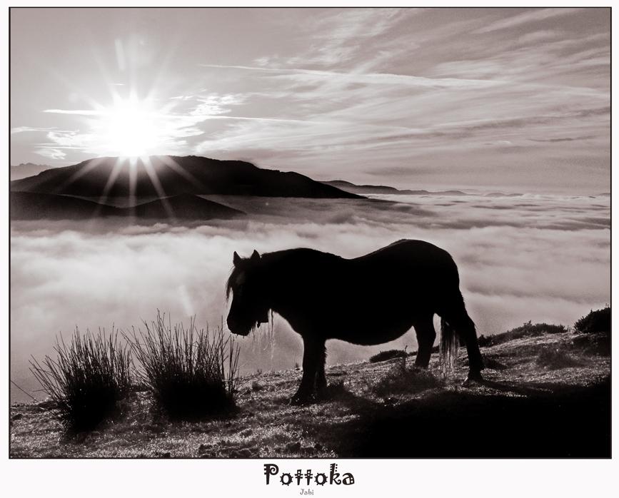 Pottoka en Saibi