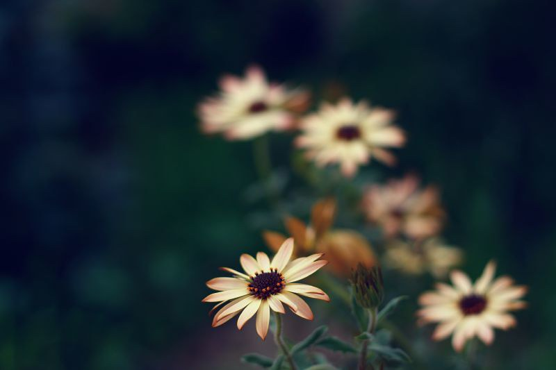 The Earth Laughs in Flowers by annfrau