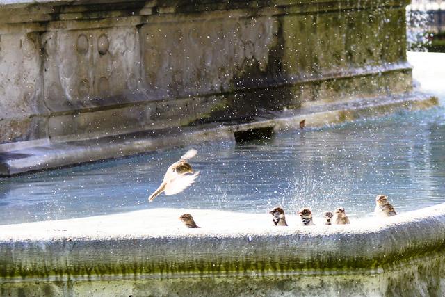 Les oiseaux barbottent