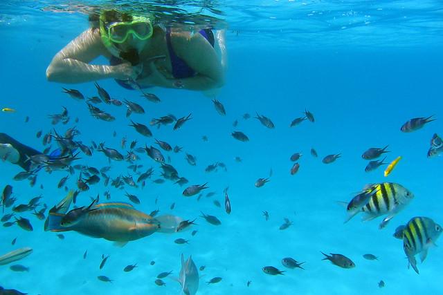 Tobago Cays Fish Feeding S1_0087