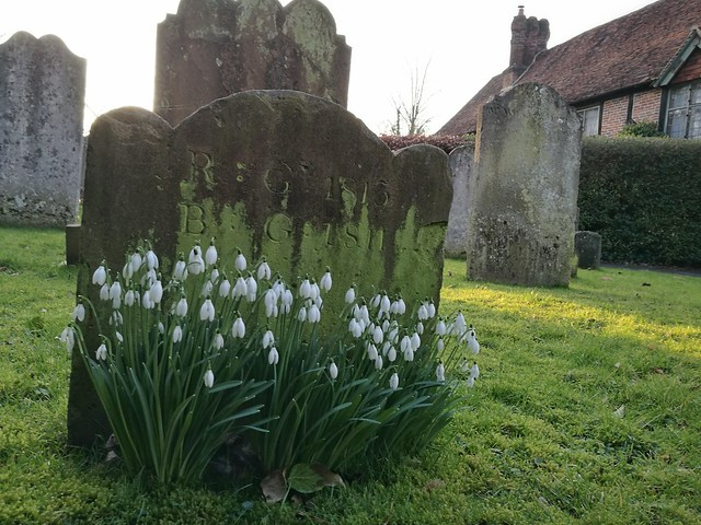 Snowdrops and a footstone