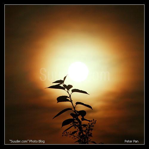 Сар /moon/ | by Ankhbayar Tumurbaatar