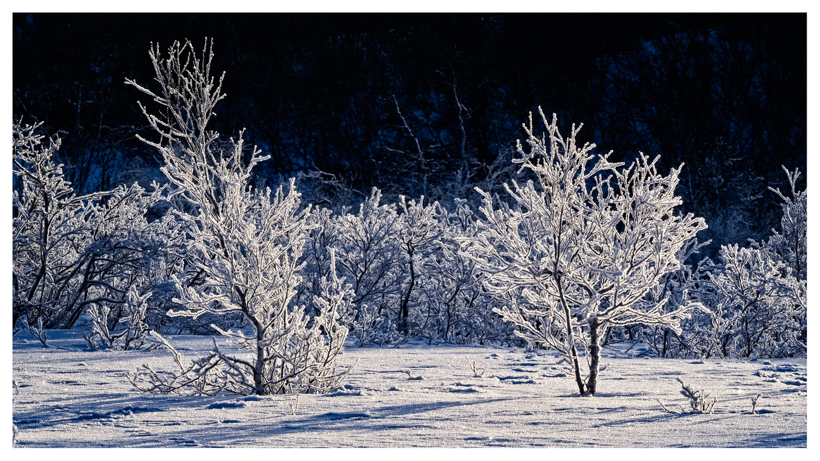 Frozen trees-