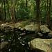 Image: Cedar Creek