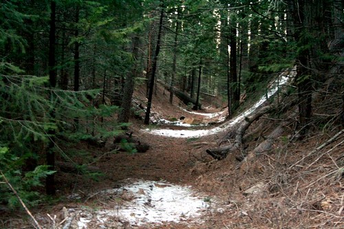 railroad trestle logging railway trail narrowgauge loggers eldoradonationalforest