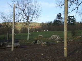 Sheep grazing, from the wood at Bryntirion | by Helen Lynn