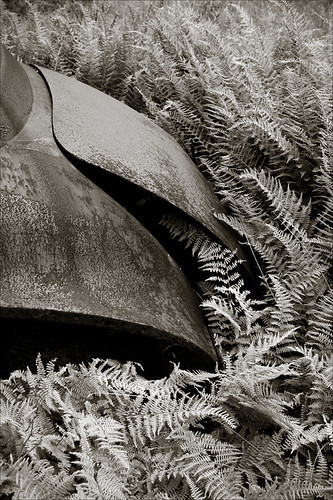 texture monochrome car antique nostalgia rusted ferns toned lostamerica mywinners