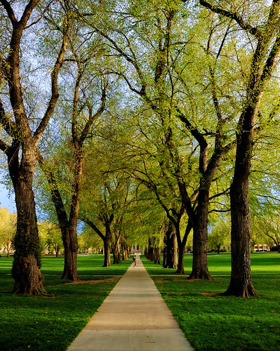 trees green landscape vanishingpoint spring colorado seasons fort path fortcollins tunnel narnia co collins oval csu 2007 coloradostateuniversity 50faves instantfave outstandingshots flickrsbest clff abigfave flickrgold superbmasterpiece goldenphotographer