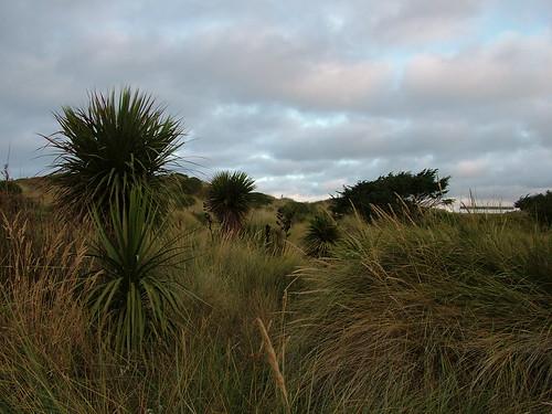 2008-02-13-Christchurch 079