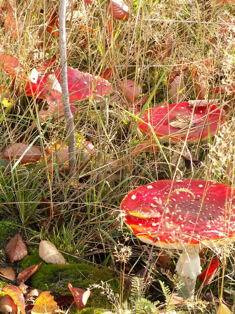 Unvorsichtig vorgewagt, am Pilz genascht, wünschte mancher sich zurück den Traum, der unvorsichtig vorgewagt ins Gestern sinkt verloren und reißt die Menschen kreuz und quer beim Picknick in Neschwitz 106260