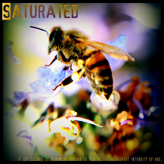 Saturated - Dictionary of Image (or... the disco bee)