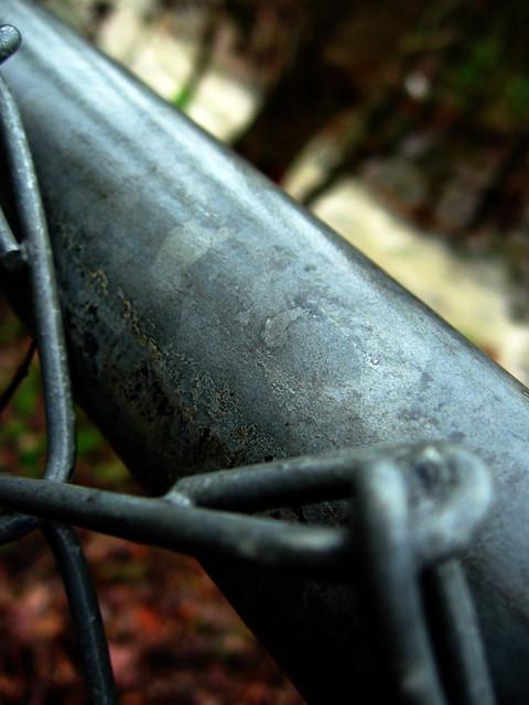 Fence Macro, Ensor Sink Park, Cookeville, TN