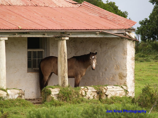 farm cottage and horse