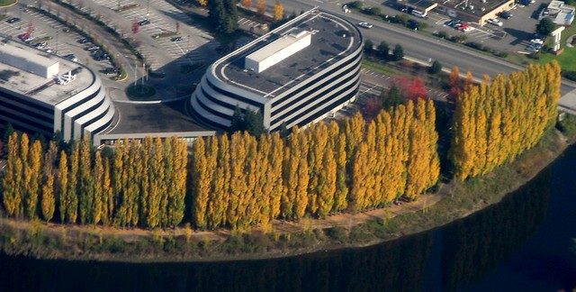 Taking off from Sea-Tac, trees along the Duwamish