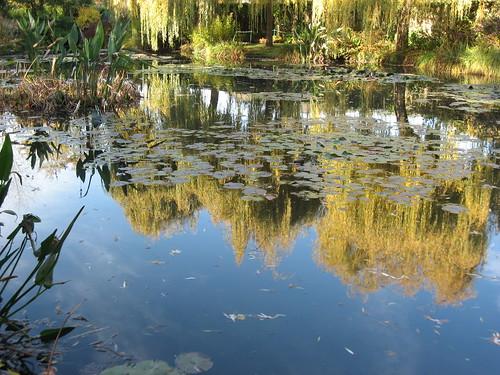 Water Lily Pond   by fboosman