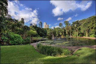 Brisbane Botanical Garden | by Burning Image