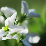 Wonderful White~