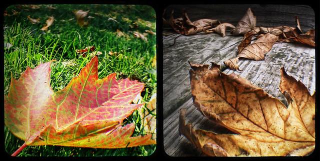 2 Leaf TtV