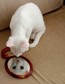 gata no espelho | by Wagner Machado Carlos Lemes