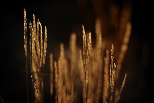 grass waiting bokeh beckett magichour vladimir f20 estragon nikond3 nikon85mmf14ais