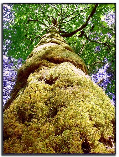 park tree vancouver geotagged island moss hugging britishcolumbia vancouverisland fujifilm supernatural campbellriver elkfalls janusz hugatree finepix2600 treesubject jalalspagesnaturealbum geo:lat=50013254 geo:lon=12535984