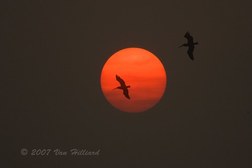 sunset sun birds fire bravo gulf florida flight forestfire brownpelican avian pelecanusoccidentalis anawesomeshot c1d2n07051047361024 vanhilliard